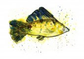 Akvarell tengeri hal
