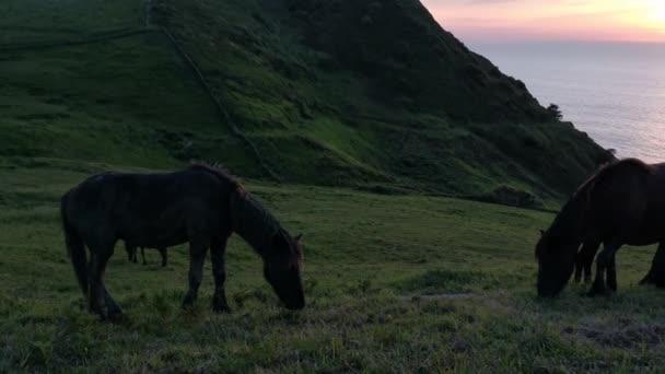 Černí koně jedí trávu z louky u moře při západu slunce