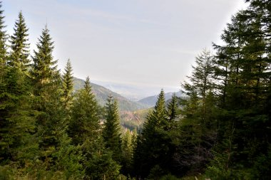 Wild green forest with views from tatra mountain