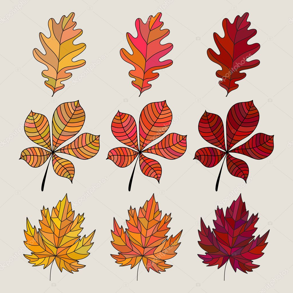 set of colorful autumn leaves vector illustration oak maple and