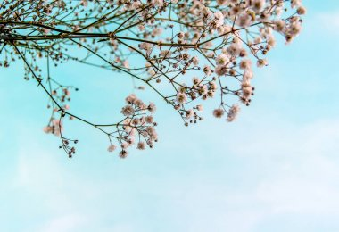 life sky small flowers blue background