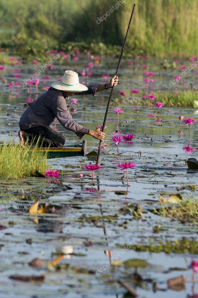 The Lotus Lake of Kumphawapi in Thailand