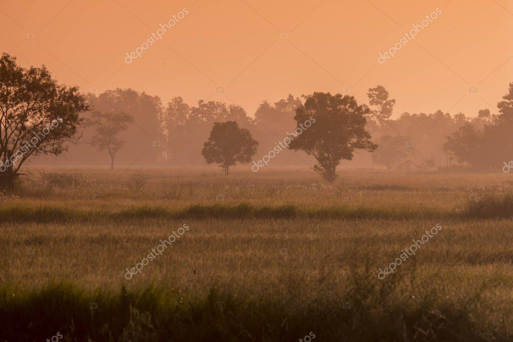 agriculture and Landscape near the city of Udon Thani in Thailand