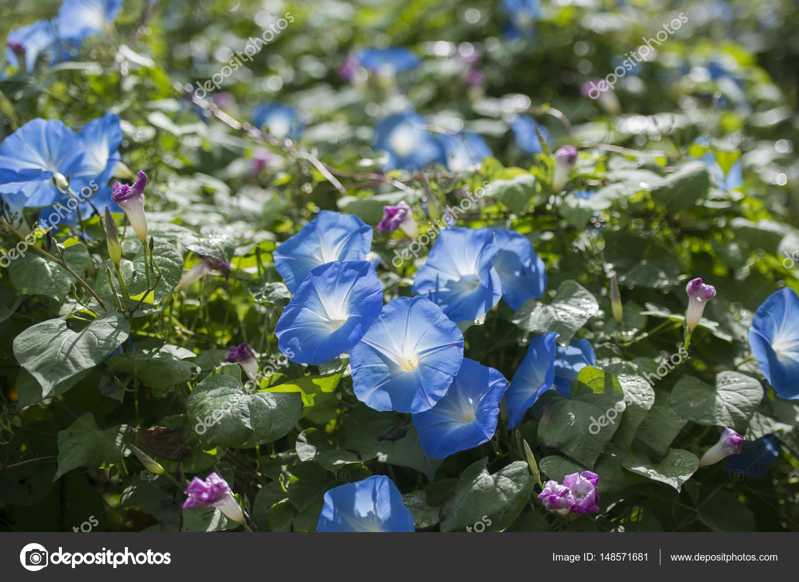 Schöne Blumen Im Garten Stockfoto Urf 148571681