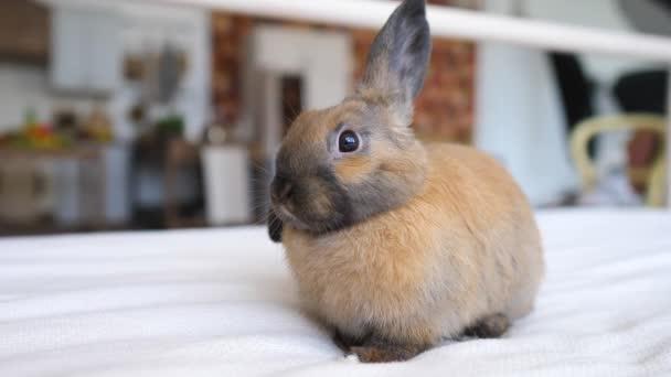 Roztomilý králíček sedí na posteli doma