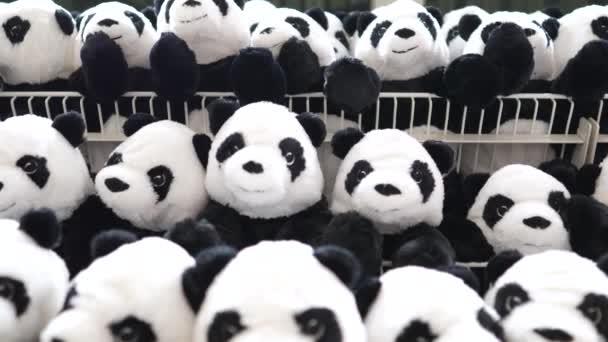 Panda-Auslage im Regal eines Spielwarengeschäfts. Nahaufnahme.