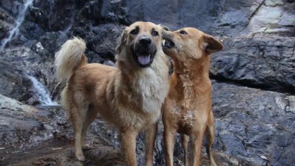 romantisches Liebespaar: Zwei Hunde kümmern sich um einander