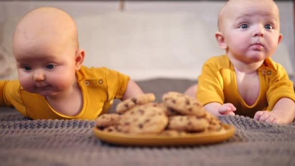 Two Funny Twin Babies Crawling To Chocolate Chip Cookies
