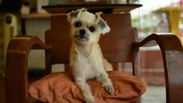Hund so nett auf Stuhl