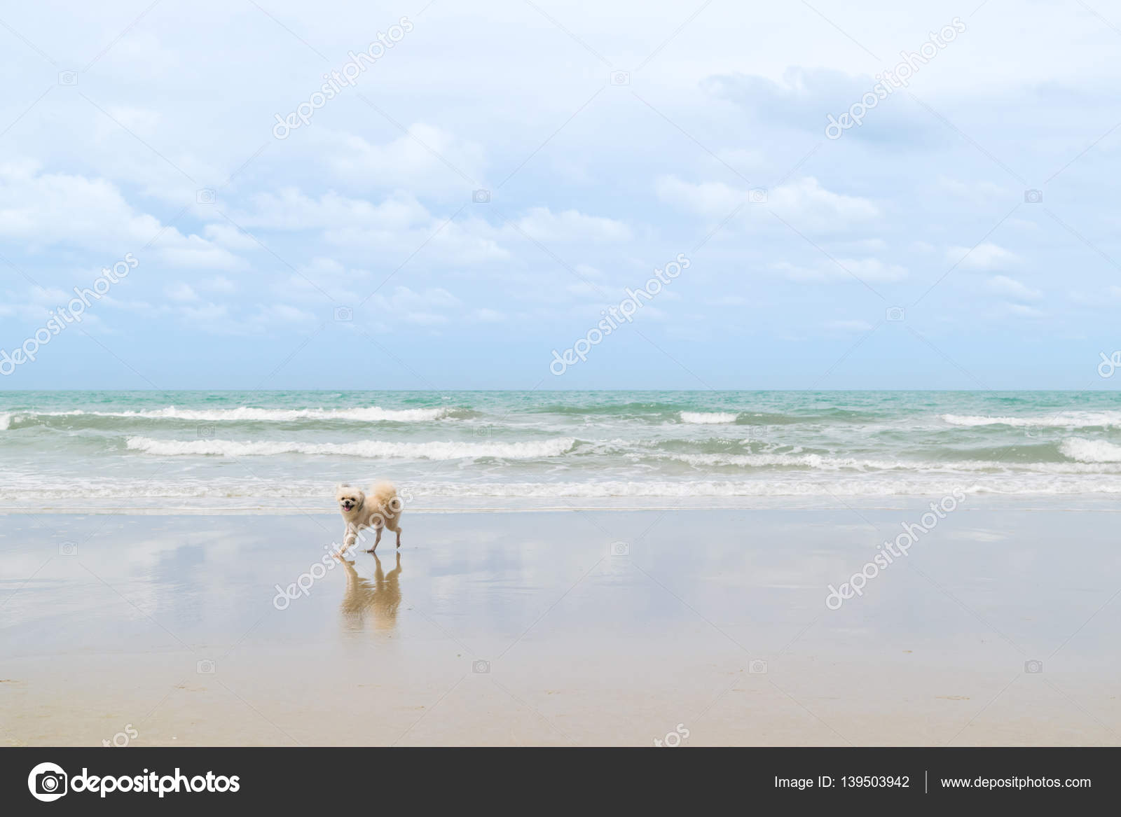 chien mignon couleur beige voyage à la plage — photographie pongmoji