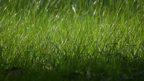 Grass field and flower of grass