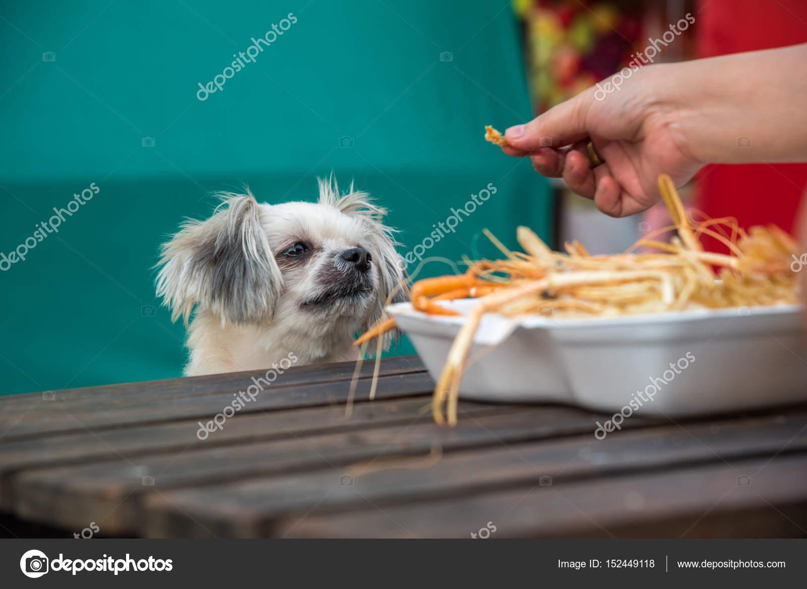 Dog Eat A Prawn Fried Shrimp Salt Feed Pet Owner Stock Photo
