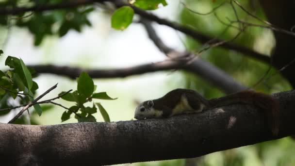 Barna színű, a fa a természet vad mókus