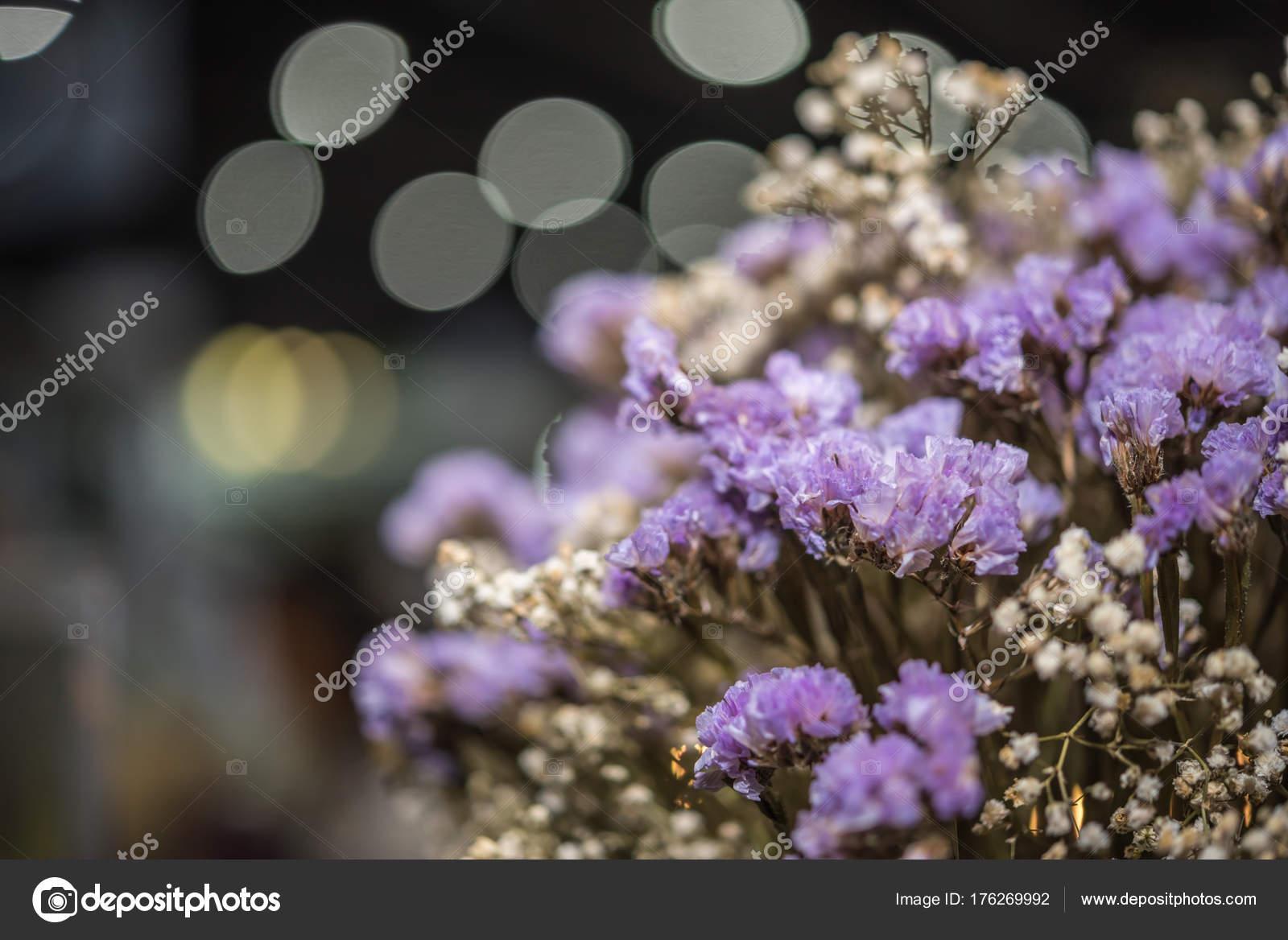 Fiori secchi con priorità bassa del bokeh di luci u foto stock