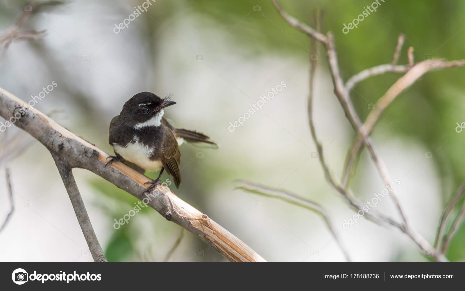 Le Gros Plan D Un Oiseau Dans La Savane Africaine Dans La Nature Photographie Pongmoji C 178188736