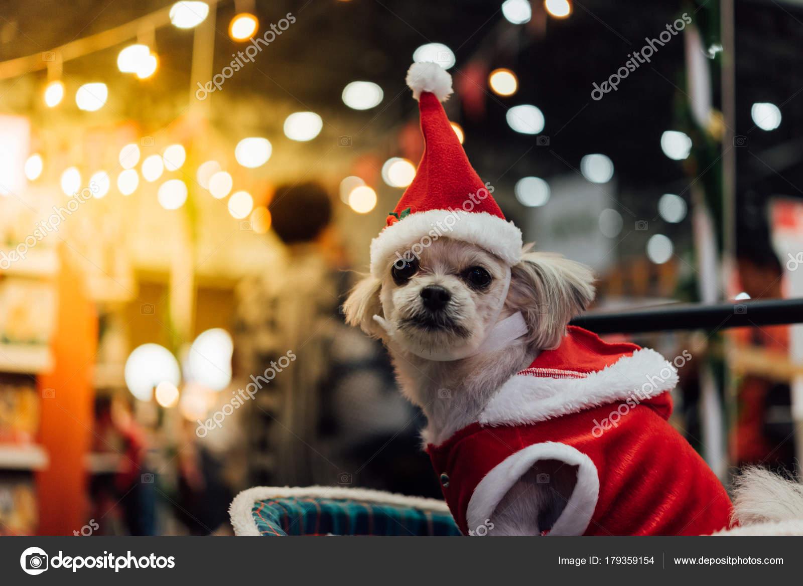Cão Doce Com Bokeh De Luz E Vestido De Papai Noel Stock