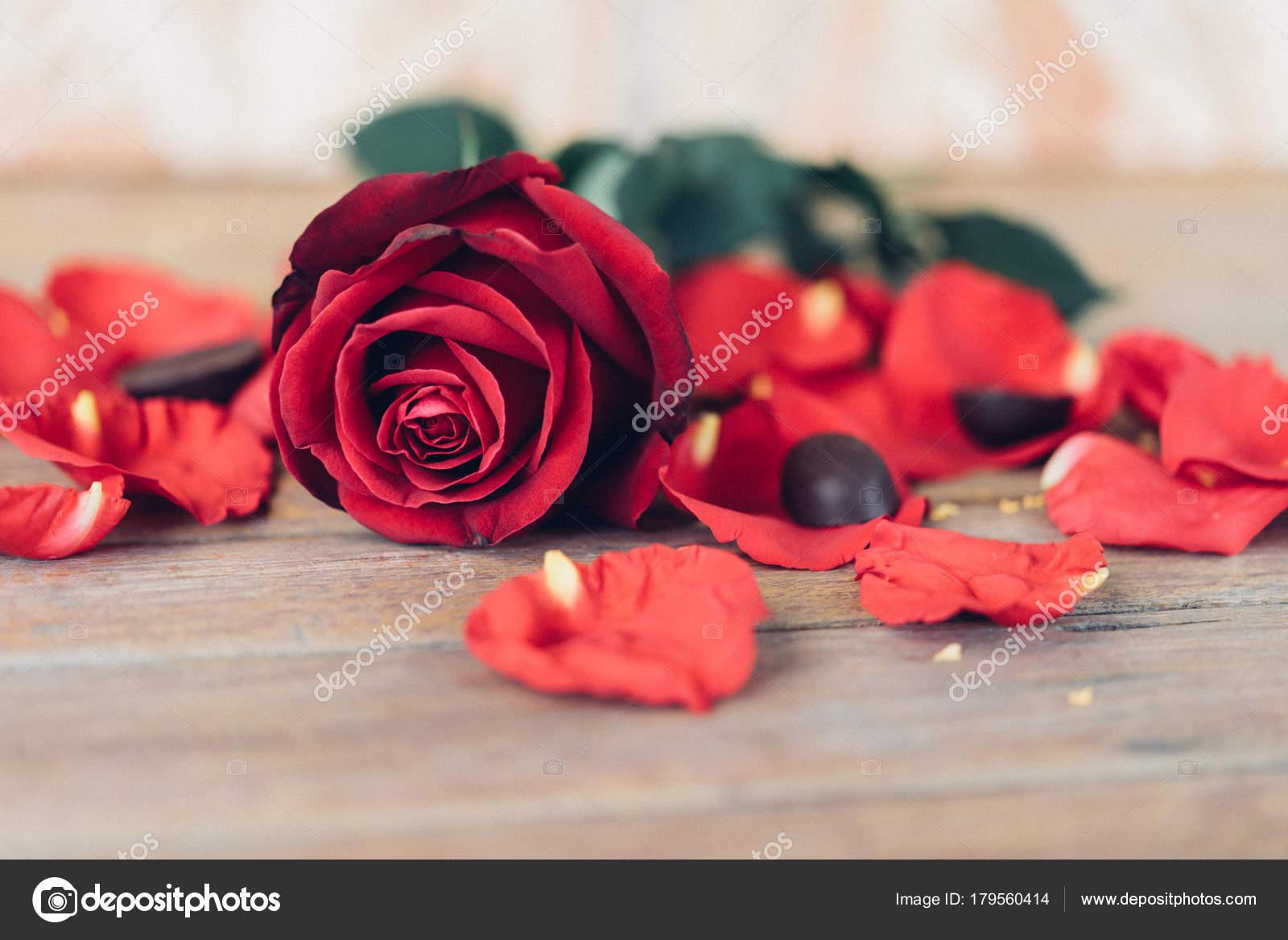 Fleur Rose Rouge Sur Un Plancher En Bois De Saint Valentin