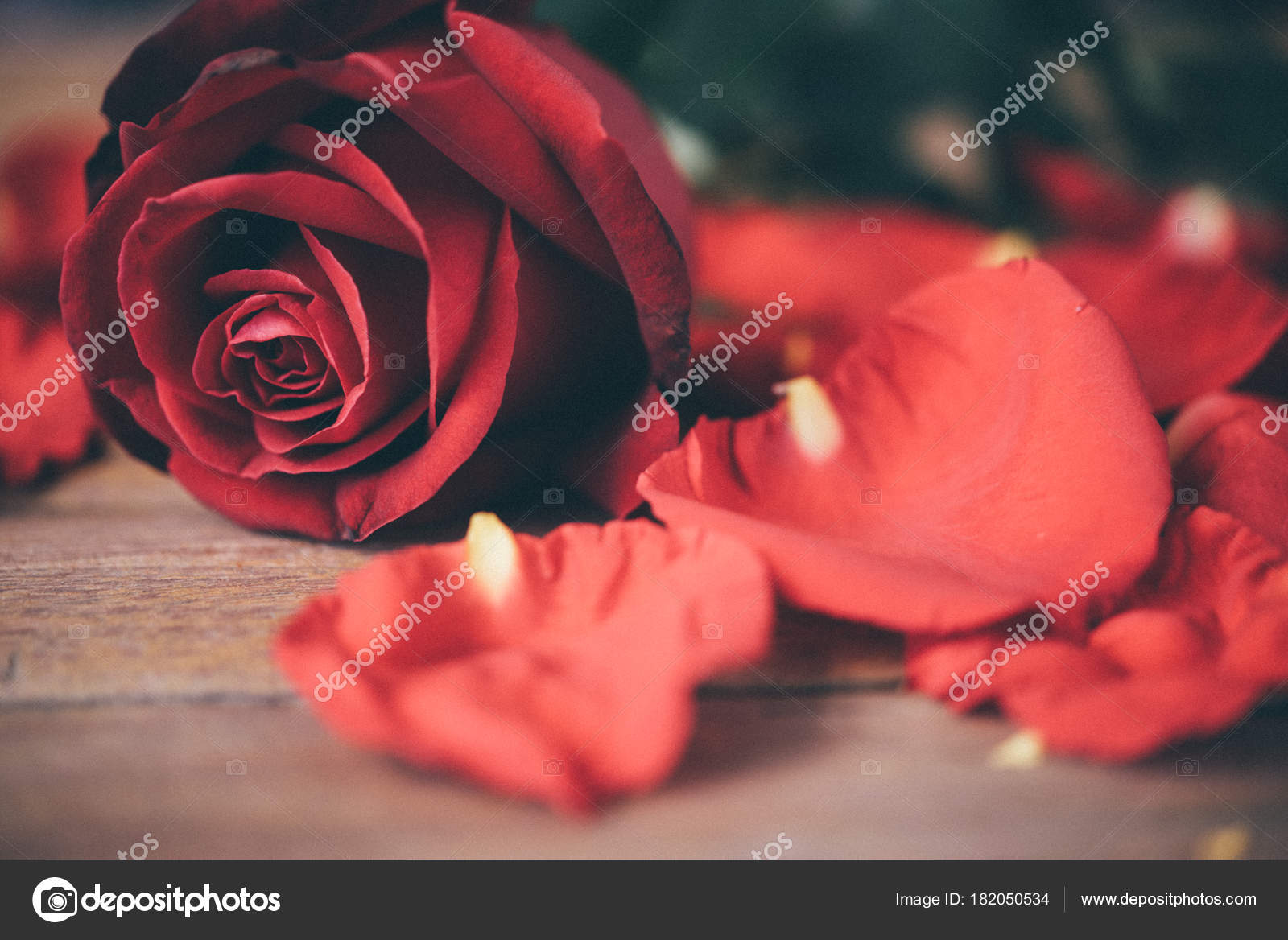 Red rose flower nature beautiful flowers garden petal red rose red rose flower nature beautiful flowers from the garden and petal of red rose flower for valentines on wooden floor with copy space in valentines day izmirmasajfo