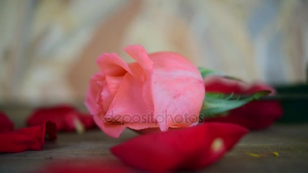 Pink rose flower nature beautiful flowers from the garden and petal of red rose flower for valentines on wooden floor with copy space in Valentines Day, Wedding or Romantic Love Valentine concept