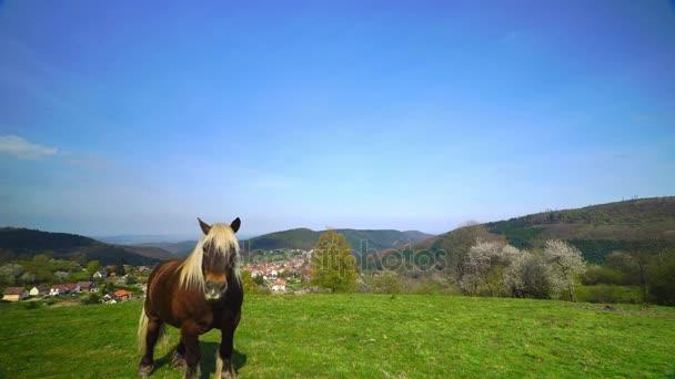 photo cheval haute resolution