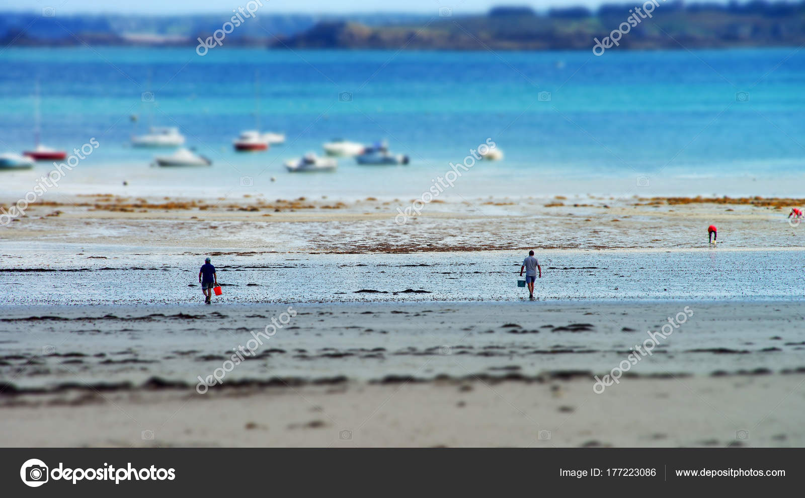Collectors of mussels on brittany seaside while low tide water collectors of mussels on brittany seaside while low tide water stock photo geenschuldenfo Gallery