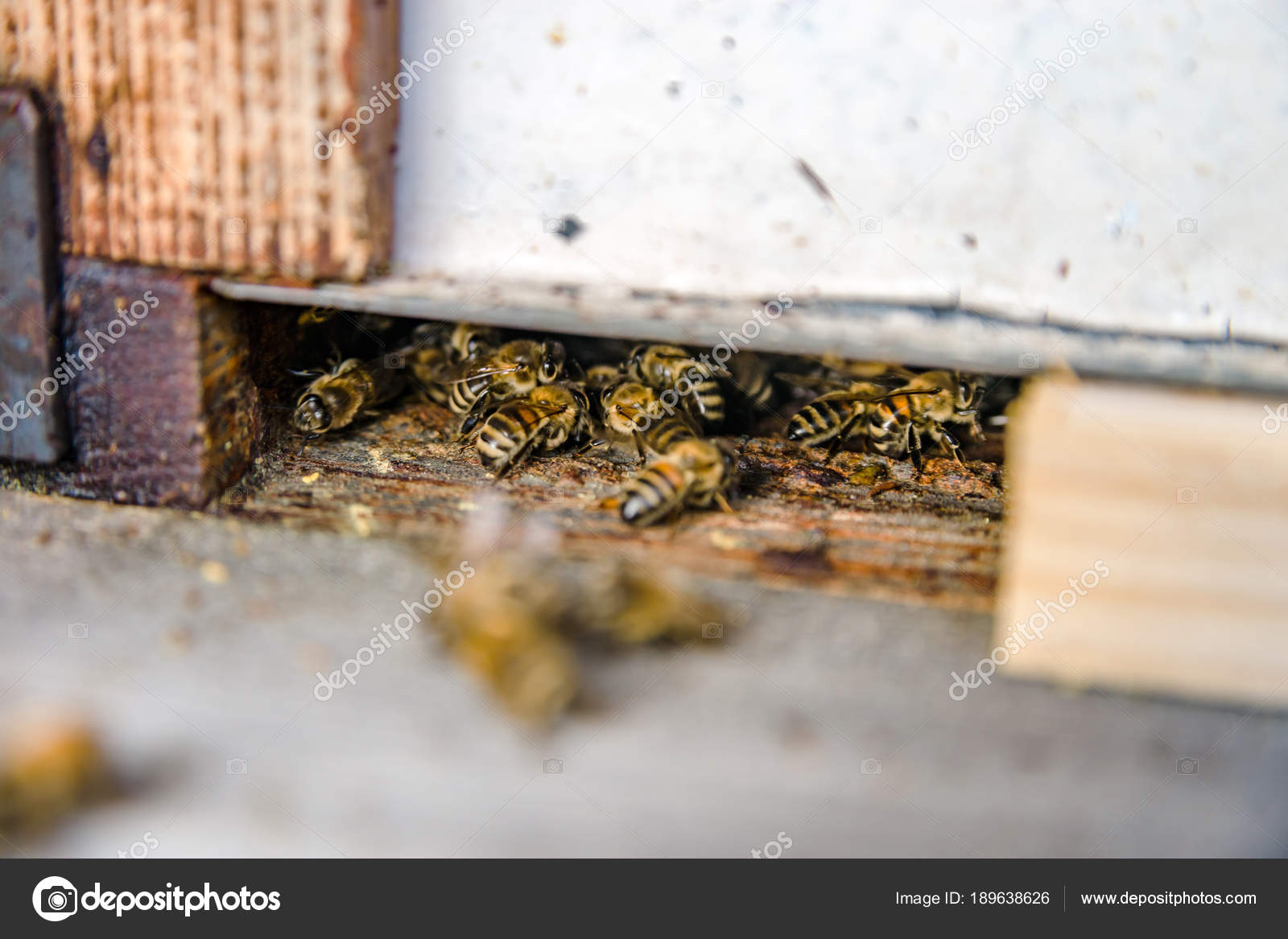 Close up of flying bees  Wooden beehive and bees  — Stock Photo