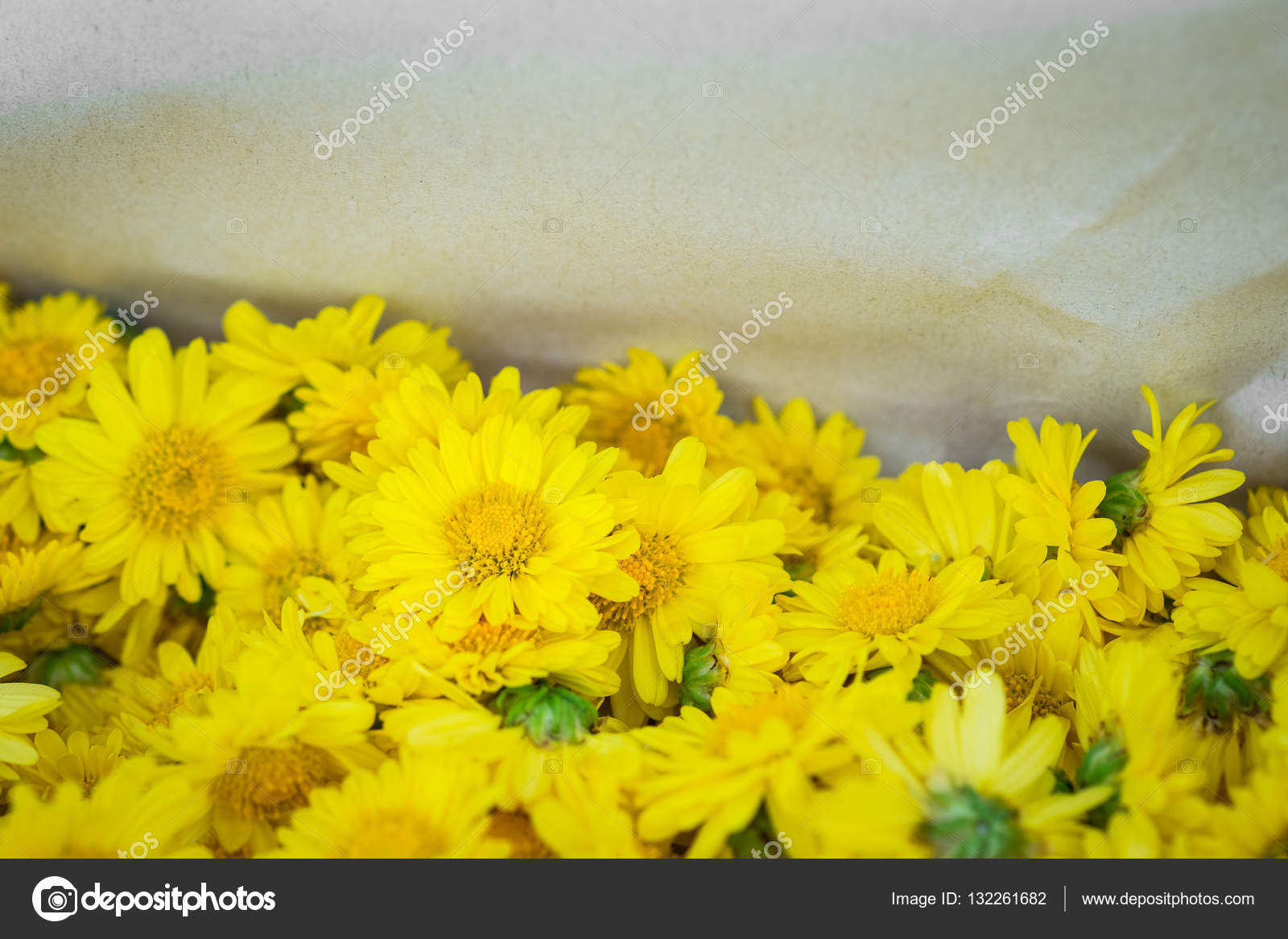 Yellow Chrysanthemum Flowers With Soft Focus Macro Image Floral