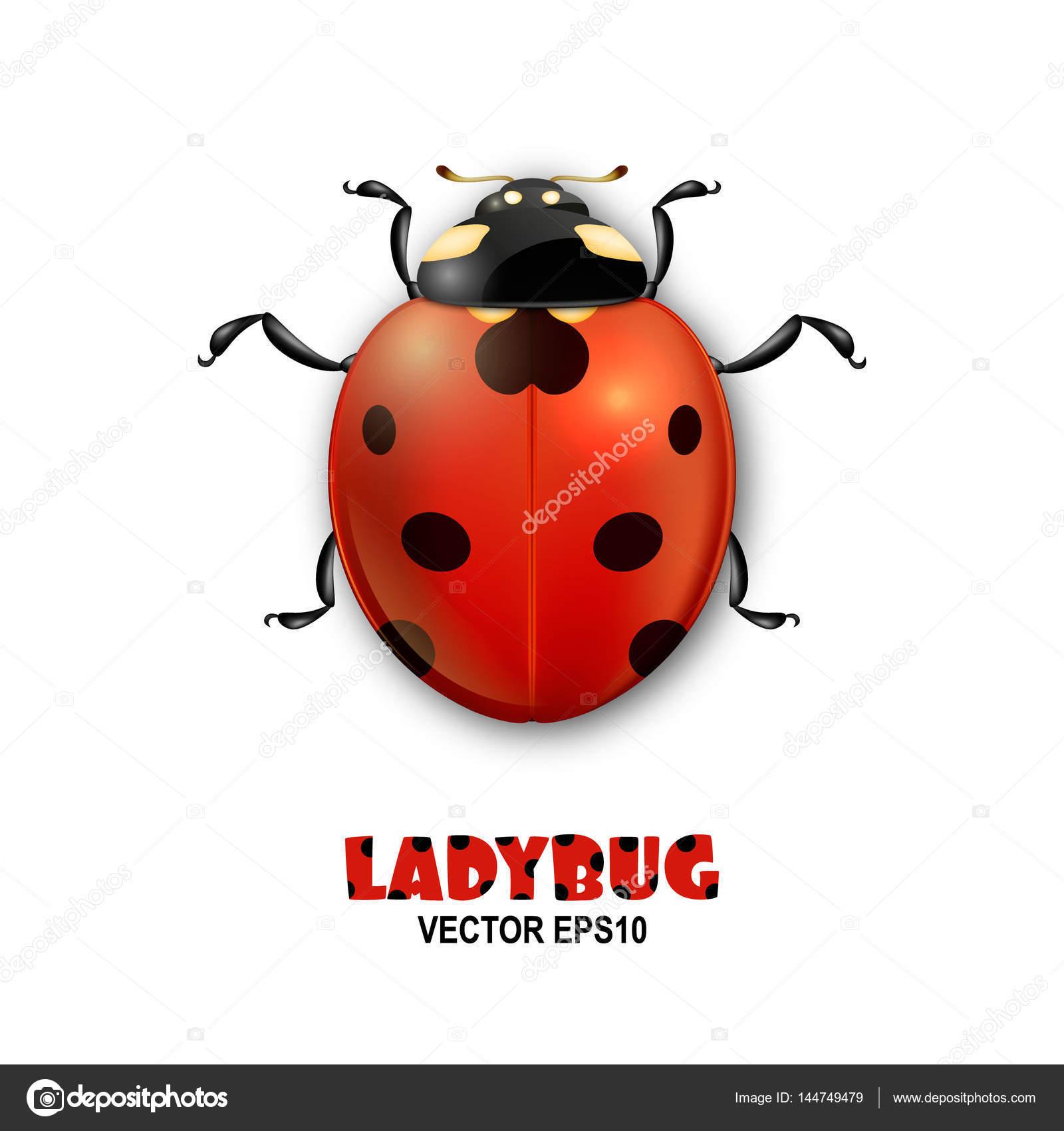 Coccinelle Symbole icône insecte vecteur close-up coccinelle réaliste isolé sur fond