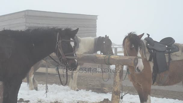 Horses on the farm at the hitching post, in the winter in heavy fog.