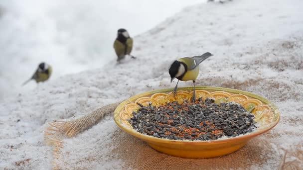 Květiny na parapetu ptáci klování semena v zimě