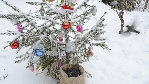 Weihnachtsbaum Samen.Vögel Picken Samen Aus Der Tasche Unter Dem Weihnachtsbaum