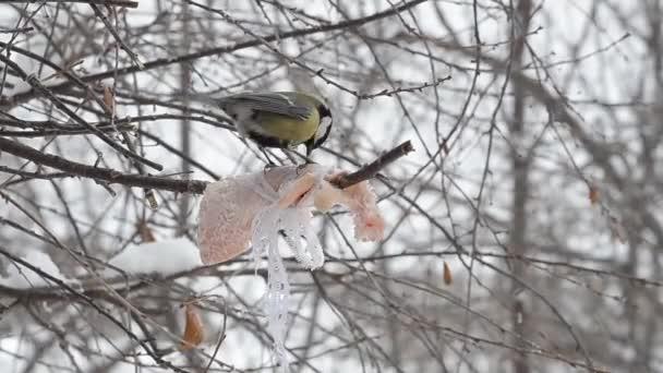 Birds Peck at suet