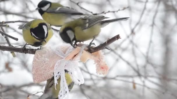 Némely madarak, széncinege csipegetni a zsír kötődik az ág. Közeli kép:.