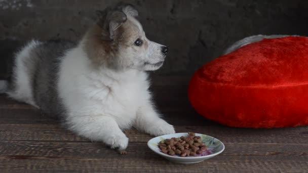 Malé štěňátko ležel vedle polštář ve tvaru srdce a jídlo