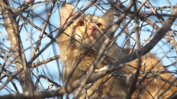 Katze sitzt auf einem Baum zwischen den Zweigen