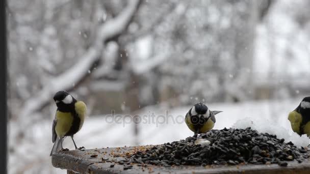Egy madár-etető mag, hó tavasszal a titmouse