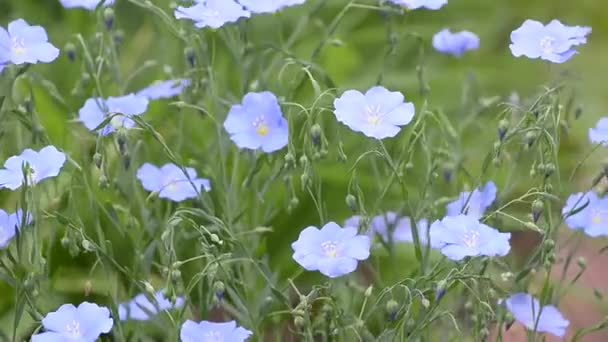 Kvetoucí letní modré povlečení