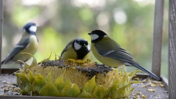 Ptáci klování slunečnicová semínka ze slunečnice leží v jesličkách.