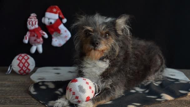Lustiger Hund an Silvester