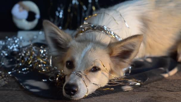 Funny pes na Silvestra