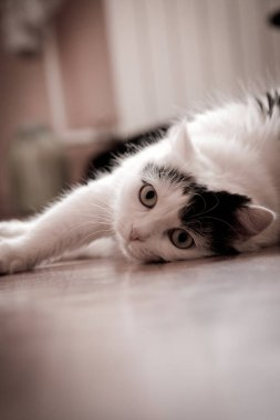 The cat is sprawled lazily on the floor, watching. She`s waiting for something interesting