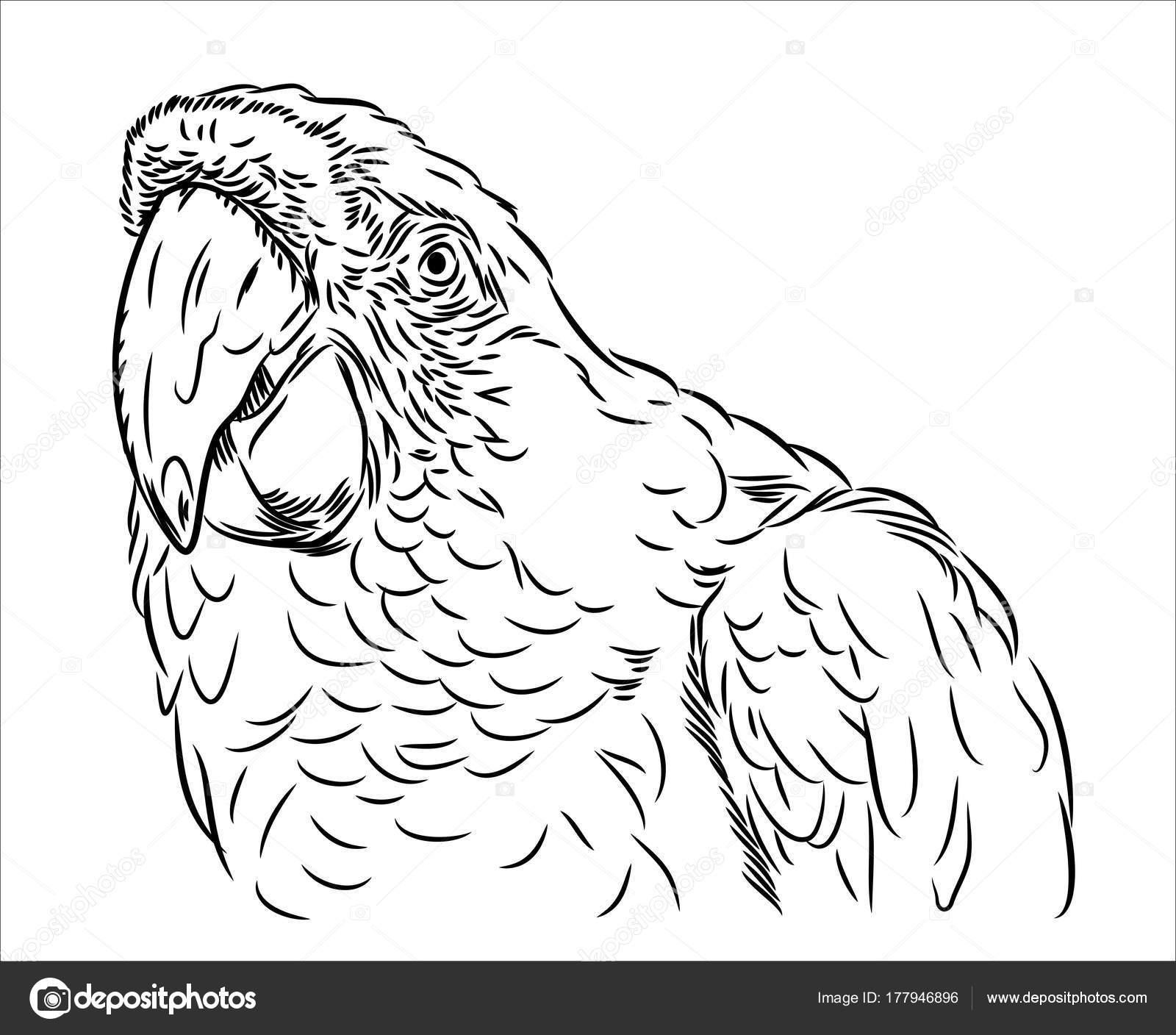 Porträt Von Ara Papagei — Stockvektor © imagoaiva #177946896
