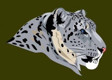 portrait of a beautiful snow leopard, wild cat