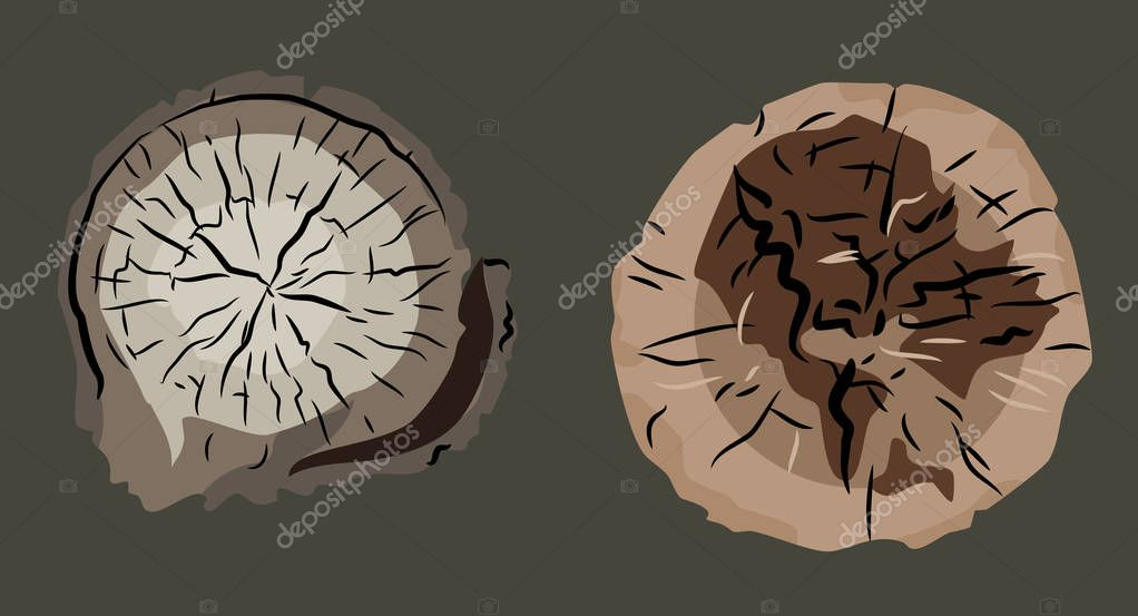 set of images of stumps (felled trees)