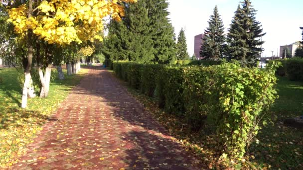 City Park, streets and alleys of the city in the autumn (Temperate climatic zone)