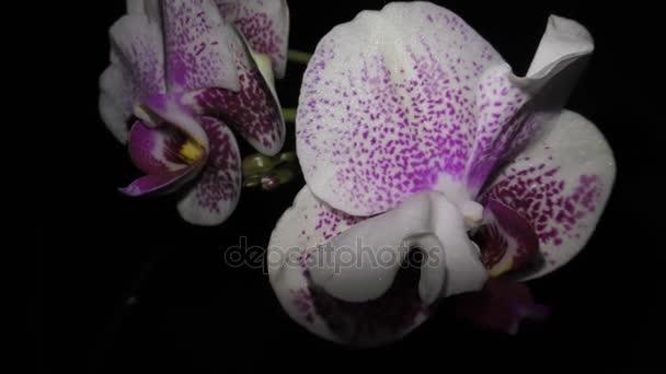 orchidea a szobában