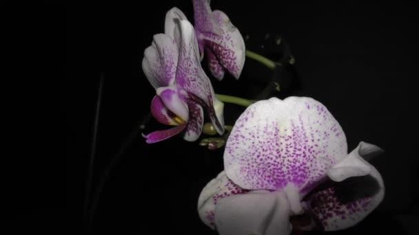 Orchidee im Zimmer