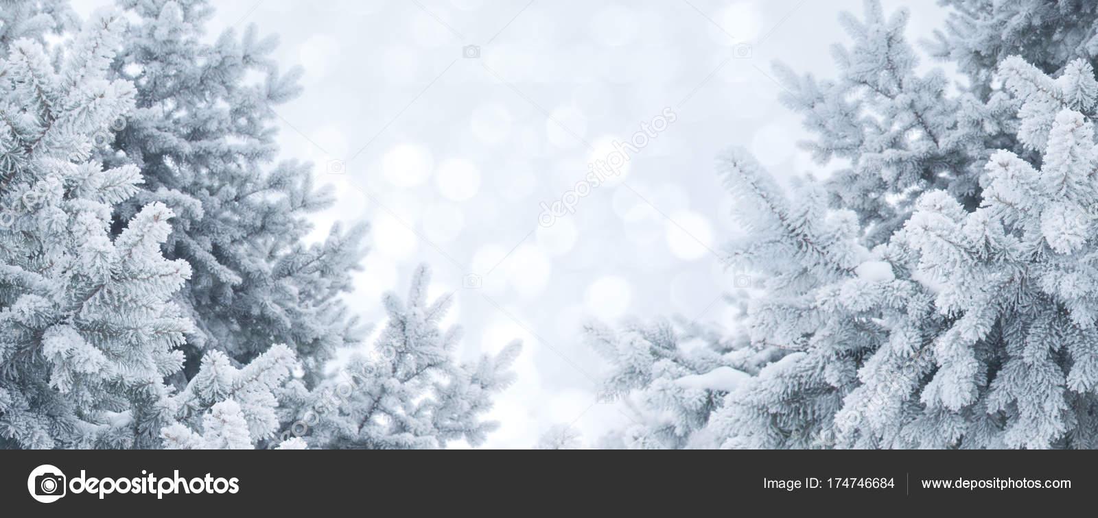 Abstrait Hiver Paysage Noël Avec Des Branches Pin Gel