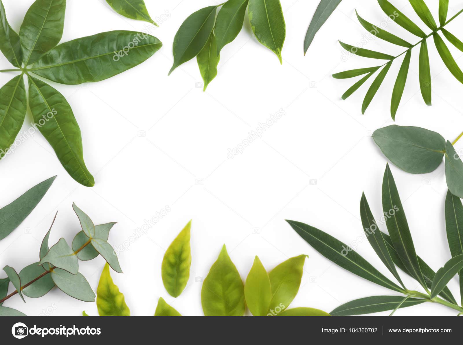 Marco Hojas Verdes Diferentes Plantas Exóticas Aislados Blanco ...