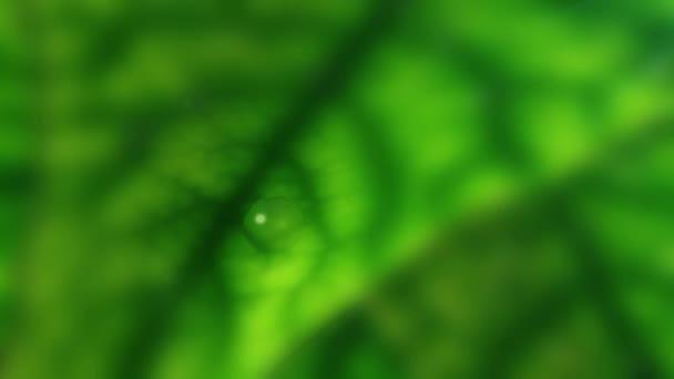 Kapky deště na listí